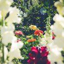Jak urządzić mały ogród przy domu